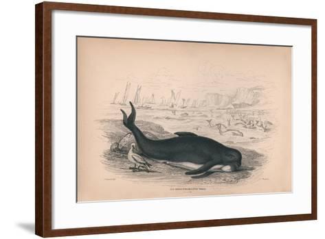 The Deductor or Caing Whale-Robert Hamilton-Framed Art Print