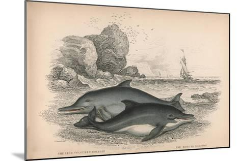 The Lead Coloured Dolphin and the Bridled Dolphin-Robert Hamilton-Mounted Giclee Print