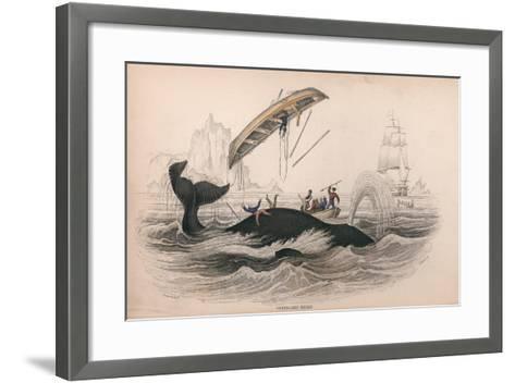 Greenland Whale-Robert Hamilton-Framed Art Print