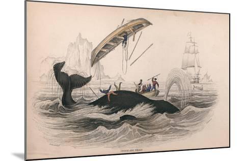 Greenland Whale-Robert Hamilton-Mounted Giclee Print