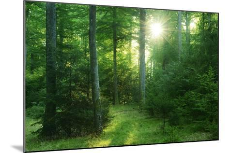 The Morning Sun Is Breaking Through Nearly Natural Beeches Mixed Forest, Spessart Nature Park-Andreas Vitting-Mounted Photographic Print