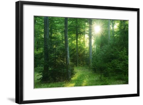 The Morning Sun Is Breaking Through Nearly Natural Beeches Mixed Forest, Spessart Nature Park-Andreas Vitting-Framed Art Print