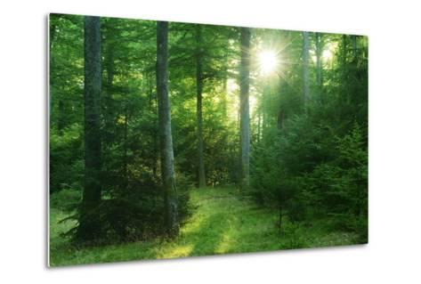 The Morning Sun Is Breaking Through Nearly Natural Beeches Mixed Forest, Spessart Nature Park-Andreas Vitting-Metal Print