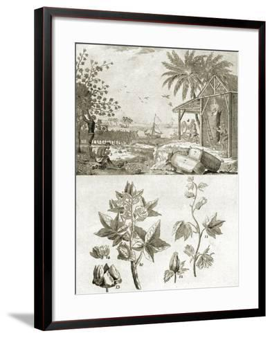 Coton or the Cotton Plant--Framed Art Print