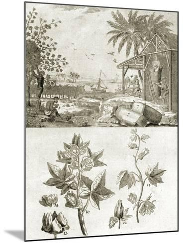 Coton or the Cotton Plant--Mounted Giclee Print