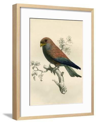 Le Rolle De Madagascar - Rollers - Eurystomus Violaceus 1863-Antoine Roussin-Framed Art Print