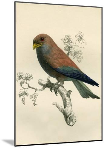 Le Rolle De Madagascar - Rollers - Eurystomus Violaceus 1863-Antoine Roussin-Mounted Giclee Print