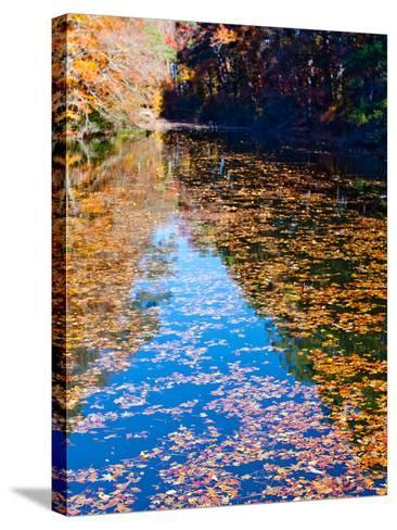 Autumn Reflecting in Lake Maury-Jason Copes-Stretched Canvas Print