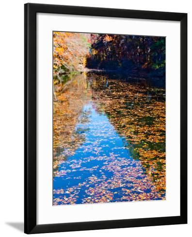 Autumn Reflecting in Lake Maury-Jason Copes-Framed Art Print
