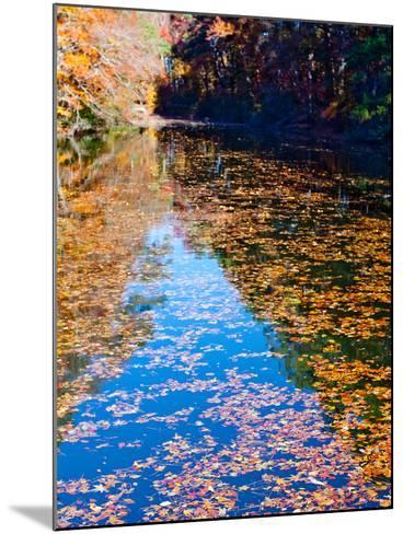 Autumn Reflecting in Lake Maury-Jason Copes-Mounted Photographic Print