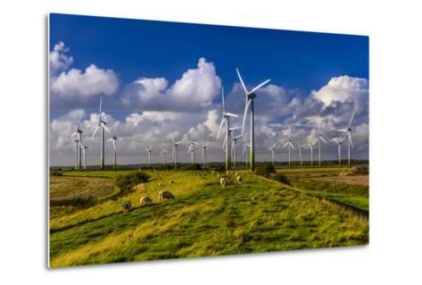 Germany, Schleswig-Holstein, North Frisia, North Frisian Marsh, Breklum-Udo Siebig-Metal Print