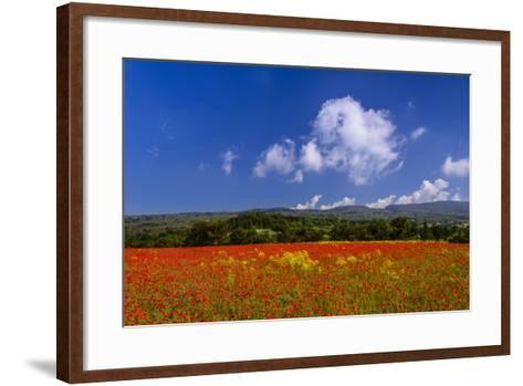 France, Provence, Vaucluse, Roussillon, Poppy Field Against Monts De Vaucluse-Udo Siebig-Framed Art Print