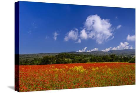 France, Provence, Vaucluse, Roussillon, Poppy Field Against Monts De Vaucluse-Udo Siebig-Stretched Canvas Print