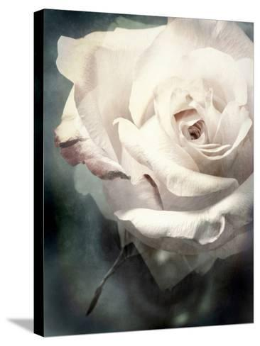 Flower of a White Rose, Texture, Composing-Alaya Gadeh-Stretched Canvas Print