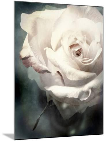 Flower of a White Rose, Texture, Composing-Alaya Gadeh-Mounted Photographic Print