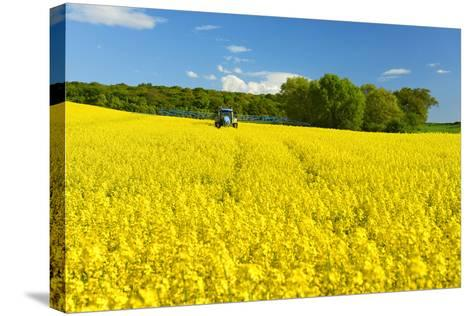 Conventional Agriculture, Farmer Spreading Pesticides on the Rape Field by Tractor-Andreas Vitting-Stretched Canvas Print