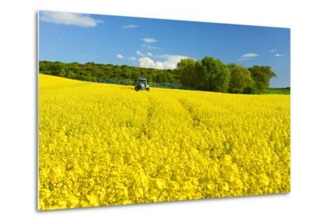 Conventional Agriculture, Farmer Spreading Pesticides on the Rape Field by Tractor-Andreas Vitting-Metal Print