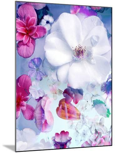 Pink and White Blossoms in Blue Water-Alaya Gadeh-Mounted Photographic Print