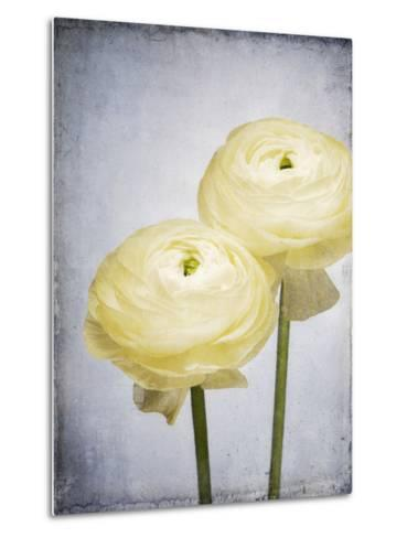 Ranunculus, Flower, Blossoms, White, Still Life-Axel Killian-Metal Print