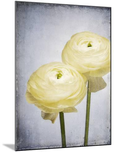 Ranunculus, Flower, Blossoms, White, Still Life-Axel Killian-Mounted Photographic Print
