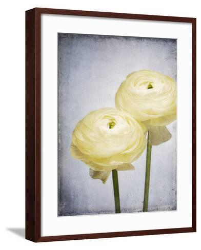 Ranunculus, Flower, Blossoms, White, Still Life-Axel Killian-Framed Art Print