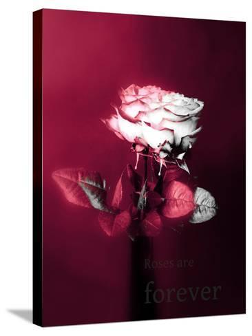 Roses in a Vase-Alaya Gadeh-Stretched Canvas Print