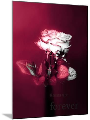 Roses in a Vase-Alaya Gadeh-Mounted Photographic Print