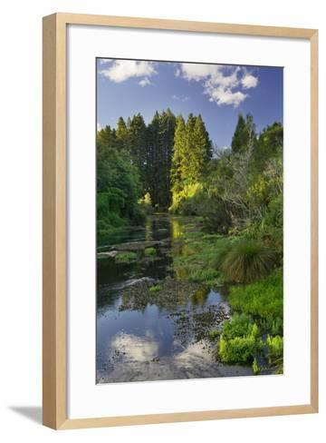 Hamurana Springs, Rotorua, Bay of Plenty, North Island, New Zealand-Rainer Mirau-Framed Art Print