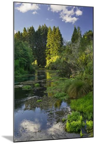 Hamurana Springs, Rotorua, Bay of Plenty, North Island, New Zealand-Rainer Mirau-Mounted Photographic Print
