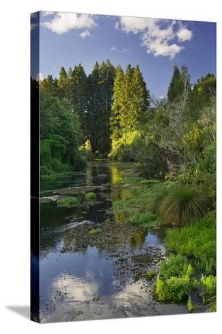 Hamurana Springs, Rotorua, Bay of Plenty, North Island, New Zealand-Rainer Mirau-Stretched Canvas Print
