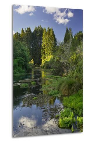 Hamurana Springs, Rotorua, Bay of Plenty, North Island, New Zealand-Rainer Mirau-Metal Print