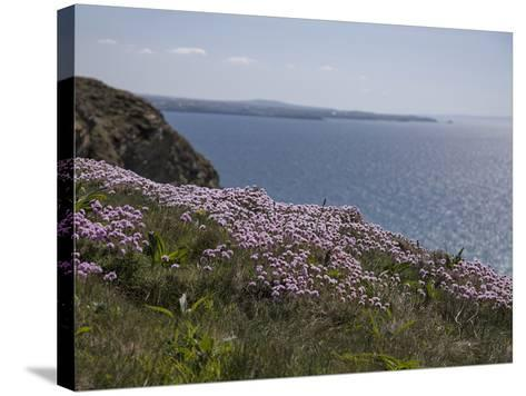 Meadow, Wild Flowers, Coast, England-Andrea Haase-Stretched Canvas Print