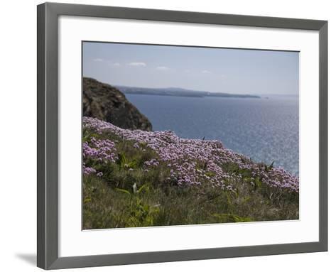 Meadow, Wild Flowers, Coast, England-Andrea Haase-Framed Art Print