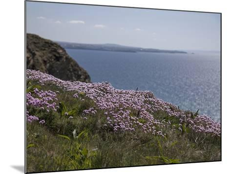 Meadow, Wild Flowers, Coast, England-Andrea Haase-Mounted Photographic Print