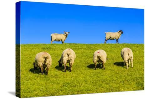 Germany, Schleswig-Holstein, North Frisia, Peninsula North Beach, Pohnshalligkoog, Dyke, Sheeps-Udo Siebig-Stretched Canvas Print