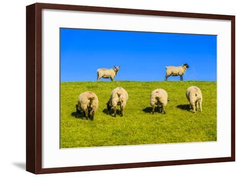 Germany, Schleswig-Holstein, North Frisia, Peninsula North Beach, Pohnshalligkoog, Dyke, Sheeps-Udo Siebig-Framed Art Print