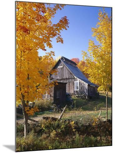 USA, Vermont, House, Old, Maple Trees, Autumn-Thonig-Mounted Photographic Print
