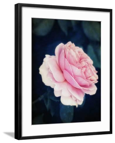 A Pink Blooming Garden Rose-Alaya Gadeh-Framed Art Print