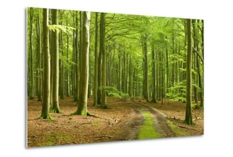 Footpath Through Near-Natural Beech Forest, Stubnitz, Island R?gen-Andreas Vitting-Metal Print