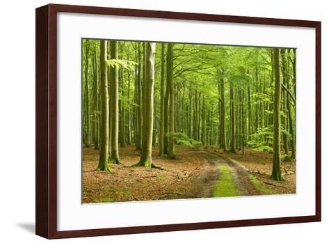 Footpath Through Near-Natural Beech Forest, Stubnitz, Island R?gen-Andreas Vitting-Framed Art Print