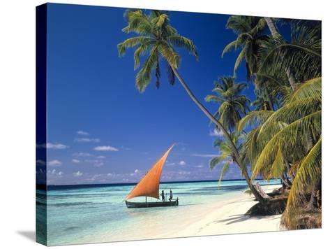 Malediven, Palmenstrand-Thonig-Stretched Canvas Print