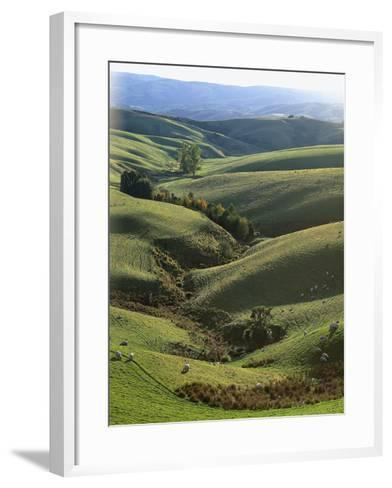 Neuseeland, Sv¼dinsel, Nahe Lawrence, Otago, Hv¼gellandschaft, Schafe, New Zealand-Thonig-Framed Art Print