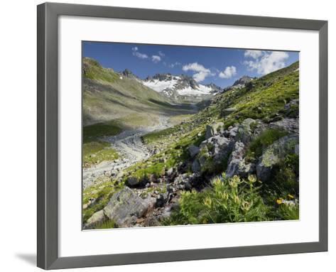 Austria, Tyrol, Bieltal (Valley), Totenfeldkopf (Mountain), Plants, Thistle-Rainer Mirau-Framed Art Print
