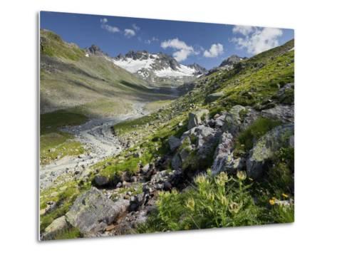 Austria, Tyrol, Bieltal (Valley), Totenfeldkopf (Mountain), Plants, Thistle-Rainer Mirau-Metal Print