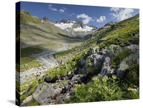 Austria, Tyrol, Bieltal (Valley), Totenfeldkopf (Mountain), Plants, Thistle-Rainer Mirau-Stretched Canvas Print