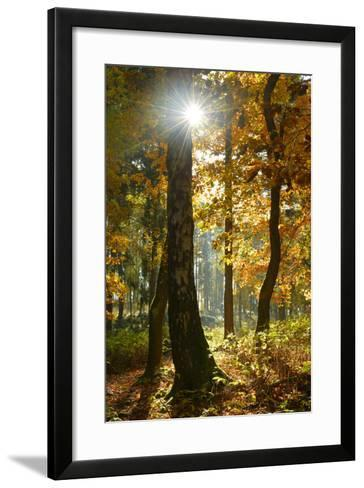 Sunrays in the Mixed Forest, Autumn, Harz, Near Wernigerode, Saxony-Anhalt, Germany-Andreas Vitting-Framed Art Print