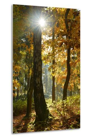 Sunrays in the Mixed Forest, Autumn, Harz, Near Wernigerode, Saxony-Anhalt, Germany-Andreas Vitting-Metal Print