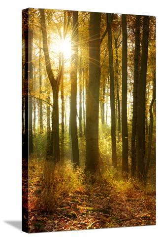 Sunrays and Morning Fog, Deciduous Forest in Autumn, Ziegelroda Forest, Saxony-Anhalt, Germany-Andreas Vitting-Stretched Canvas Print