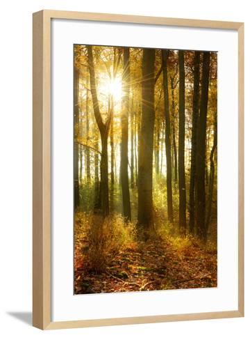 Sunrays and Morning Fog, Deciduous Forest in Autumn, Ziegelroda Forest, Saxony-Anhalt, Germany-Andreas Vitting-Framed Art Print