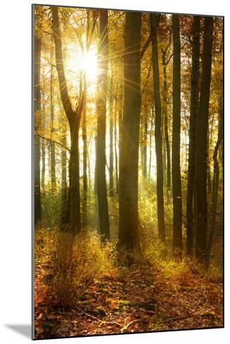 Sunrays and Morning Fog, Deciduous Forest in Autumn, Ziegelroda Forest, Saxony-Anhalt, Germany-Andreas Vitting-Mounted Photographic Print